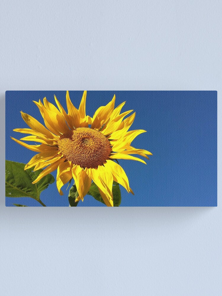 Alternate view of Sunflower and Blue Sky Canvas Print