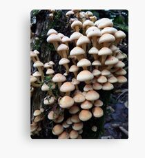 Toadstools in the Woods Canvas Print