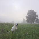 Foggy mornig by Trine