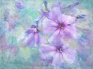 shades of purple by Teresa Pople