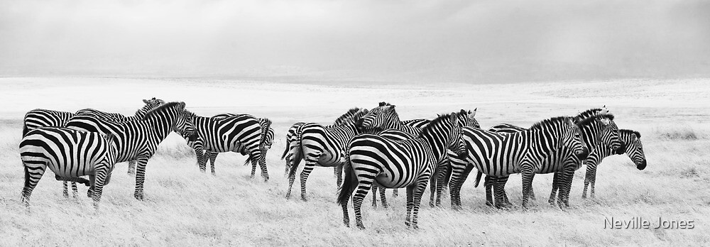 Zebra, Maasai Mara, Kenya by Neville Jones