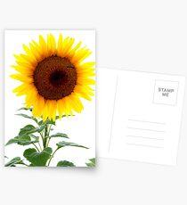 Luminescent Sunflower Postcards