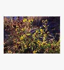 Fall Flowers Photographic Print