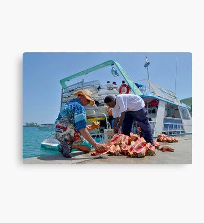 Choosing a Conch Shell... Nassau, The Bahamas Canvas Print