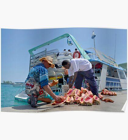 Choosing a Conch Shell... Nassau, The Bahamas Poster