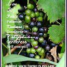 The Fruit of the Spirit by Paula Tohline  Calhoun