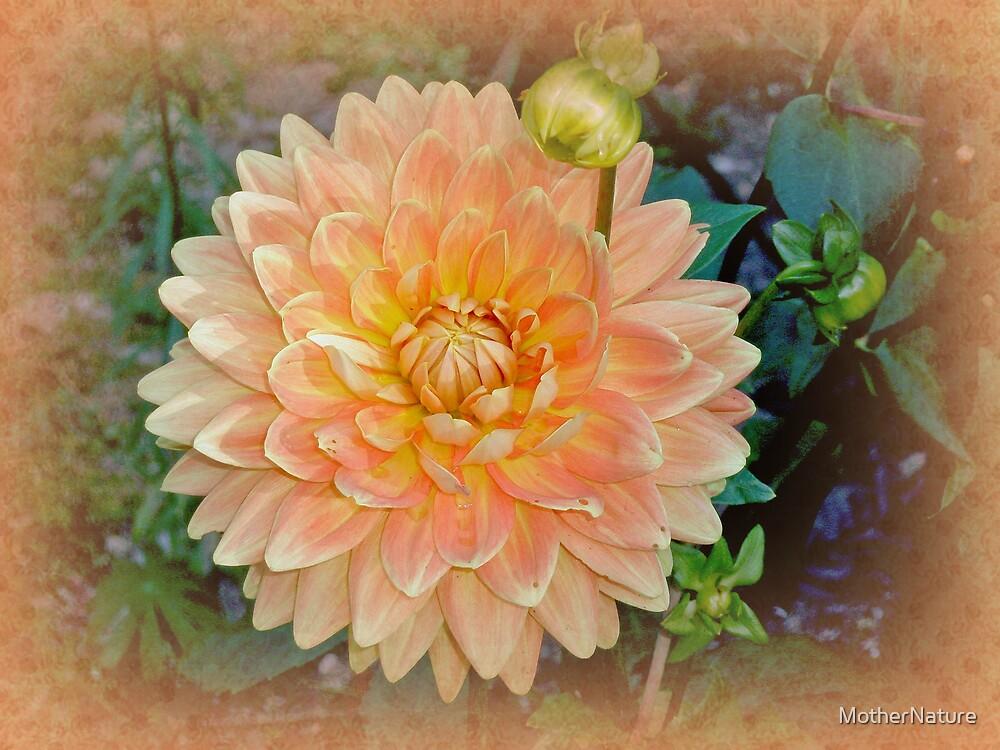 Peachy Keen Dahlia by MotherNature