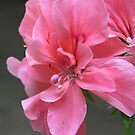 Pink and Center! by Pat Yager