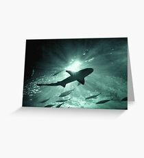 Aquarium Shark in the Spotlight Greeting Card