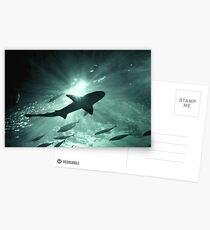 Aquarium Shark in the Spotlight Postcards