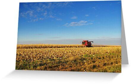 Evening Harvest by Greg Belfrage