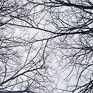 Tree branches by Asrais
