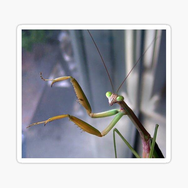 Chinese Mantis Sticker