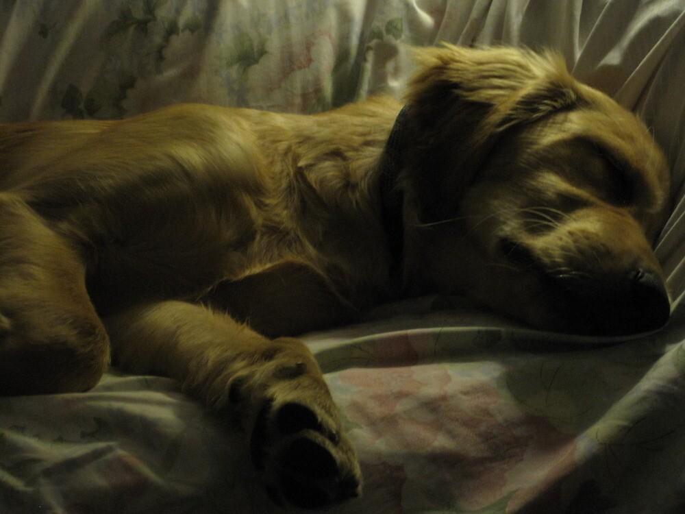 golden sleep by uncleblack