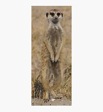 Meercat under Review Photographic Print