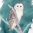 Tasmanian Masked owl by melhillswildart