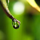 Rain Drop by Kyle  Rodgers
