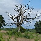 tree by davidbloomfield