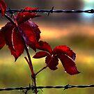Red Red Wine ! by Jan Siemucha