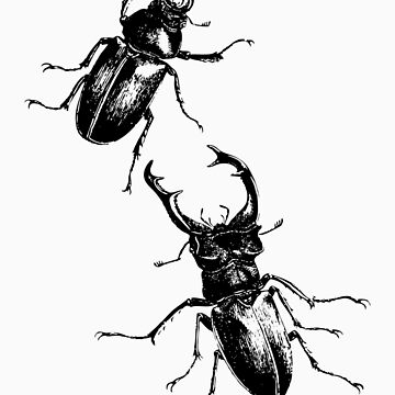 Stag beetles by Norgesbacon