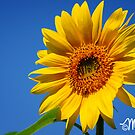 Sun Worship by milkayphoto