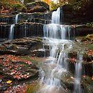 Fallen Leaves On The Nameless Waterfall by Gene Walls