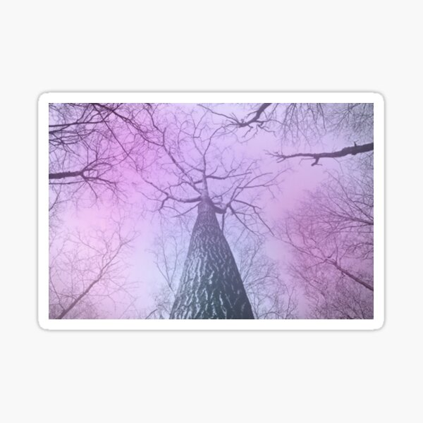 Trees in pink haze  Sticker
