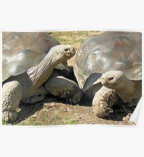 Talkative Tortoises Poster
