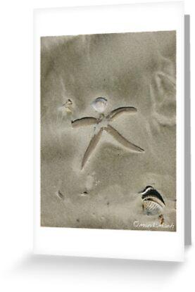Seashell Man by mandamaeh