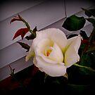 The Rose by VJSheldon