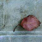 Minimalist Leaf Portrait by Jane Underwood