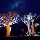 The Boab Garden at Midnight by David Haworth