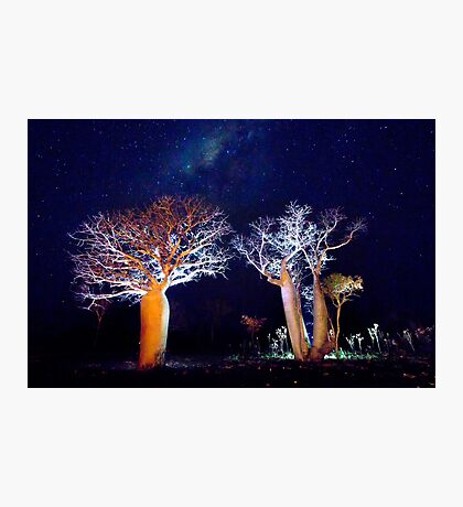 The Boab Garden at Midnight Photographic Print
