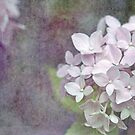 Vintage Pink Hydrangea by Astrid Ewing Photography