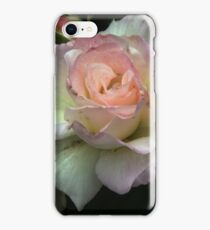 Pink edged white rose Leith Park Victoria 20151023 0480 iPhone Case/Skin
