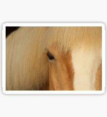 Palomino Horse Eye Sticker