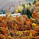 Fall by Mojca Savicki