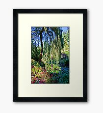 Willow. Framed Print