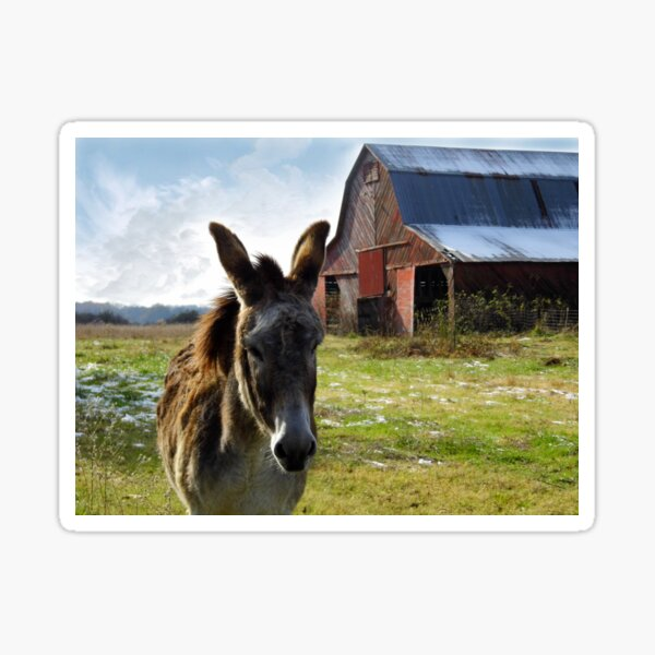 Hargroves' Mule Sticker