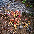 log fall by Bruce  Dickson