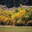 Fall Color by Amy Pehringer