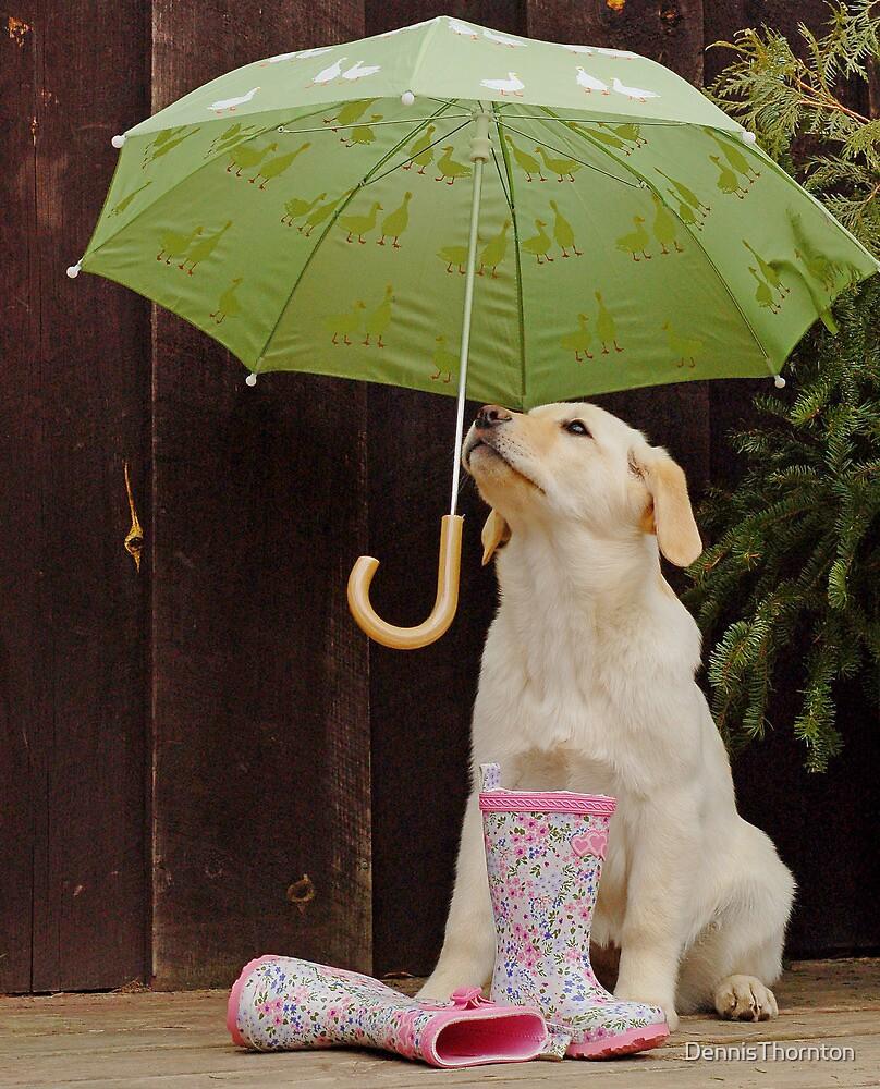 They said rain today! by DennisThornton