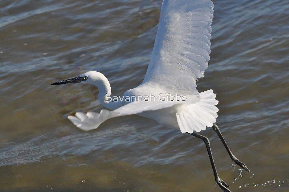 White Morph Reddish Egret by Savannah Gibbs