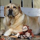 Labrador (Bouncer6) by Russell Voigt