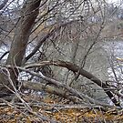 Dead trees in the Rideau River, Ottawa, ON Canada by Shulie1