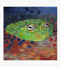 African bullfrog painting - 2012 Photographic Print