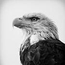 Eagle by smilyjay