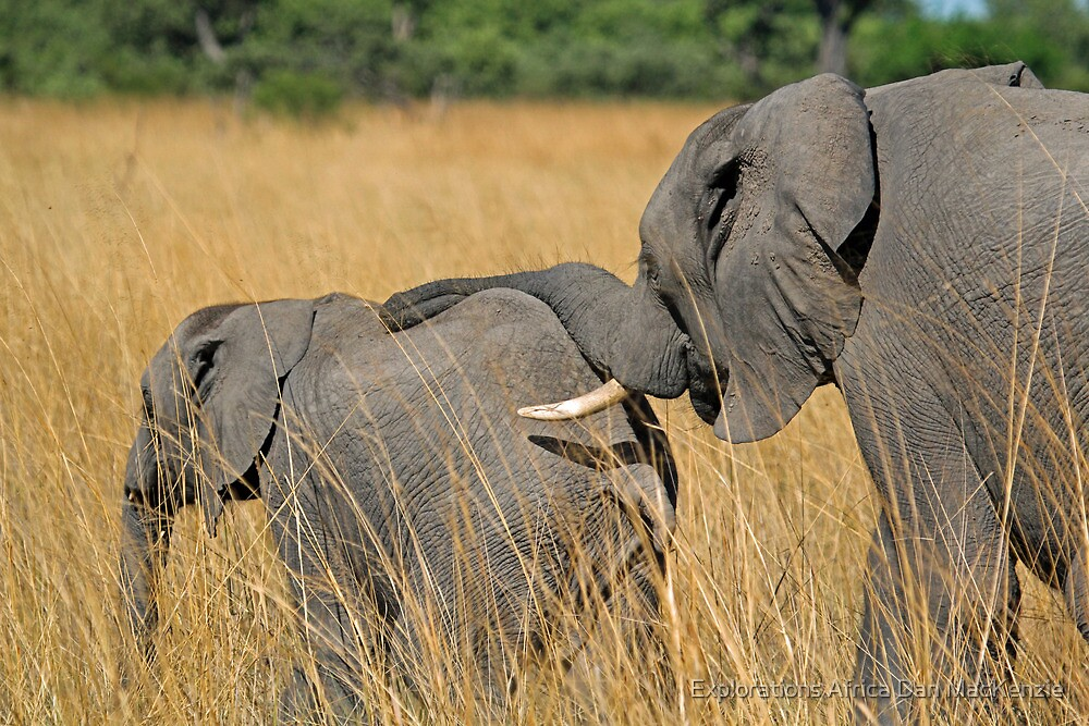 Keeping in touch by Explorations Africa Dan MacKenzie