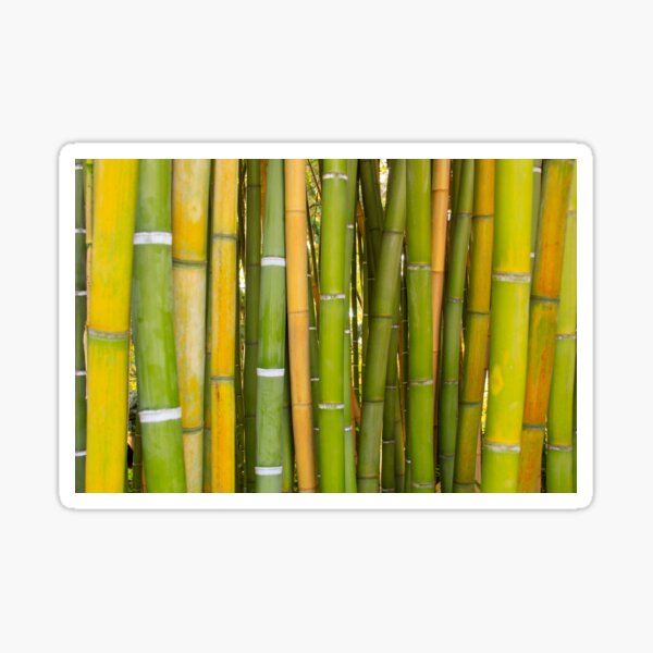 Straight lines of bamboo wood texture background Sticker