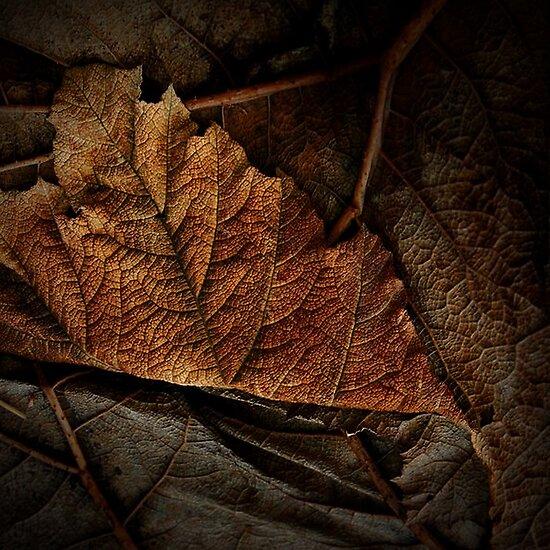Leaves by EbyArts